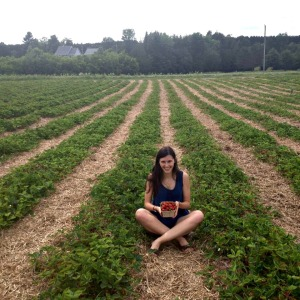 Cueillette de fraises